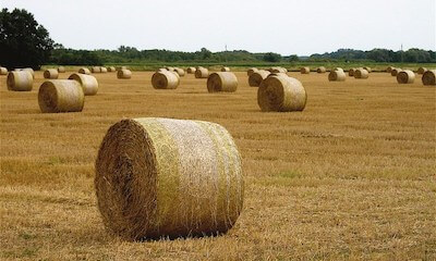 agricultural biomass